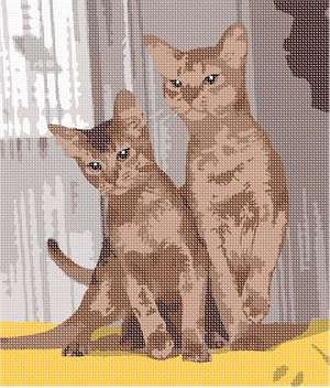 A pair of abyssinian felines, posing in front of a sheer curtain backdrop.
