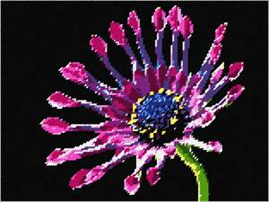 African daisy has a bold, graphic look that's hard to find in more common daisies. Flowers are big, up to 4 inches across, often with interesting, eyelike markings around the flower's center.