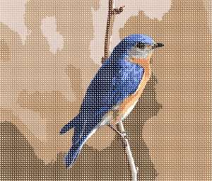 Who can resist a bluebird?