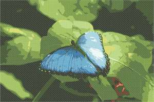A butterfly in blue resting on a green leaf.  Butterflies are deep and powerful representations of life. Around the world, people view the butterfly as representing endurance, change, hope, and life.