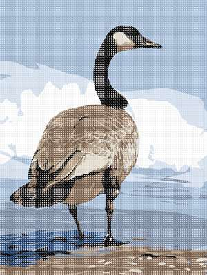 A regal Canada Goose waddles into the icy blue waters