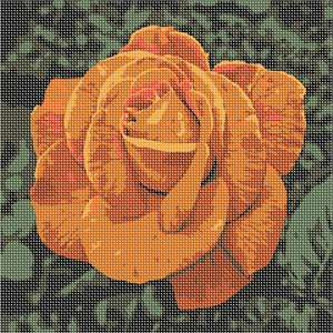 Rose in vibrant copper tones. Red roses symbolize love and romance. Pink roses symbolize gratitude, grace, admiration, and joy. Orange roses symbolize enthusiasm and passion. Yellow roses symbolize friendship. White roses symbolize innocence and purity.