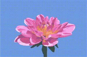 A pink dahlia with a bright blue sky background