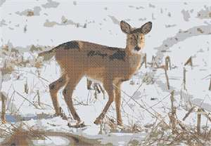 A deer outdoors in midst of snow.