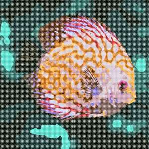 A discus fish in the deep sea