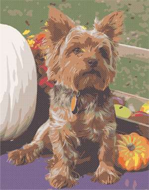 This Yorkshire terrier is enjoying autumn with pumpkins and all. 