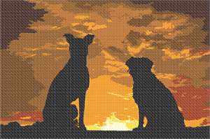 Two dogs watching the sunset