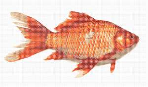 A realistic looking goldfish minus the bowl