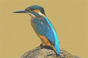 Kingfishers are small unmistakable bright blue and orange birds.