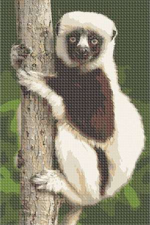 A lemur climbing and holding tight