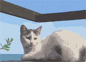 A cat relaxing at the waterside on a bright day