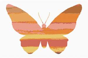 A variegated butterfly in shades of deep bright orange