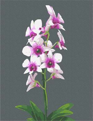 A variation of the bamboo orchid