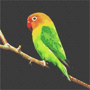 Bright parakeet resting on a branch