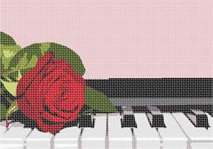 Radiant red rose resting on piano keys