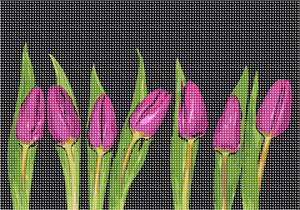 Seven tulips on display. Real live tulips bloom once a year. Tulip needlepoints can be enjoyed throughout the year. Red tulips are most strongly associated with true love, while purple symbolizes royalty. The meaning of yellow tulips has evolved somewhat, from once representing hopeless love to now being a common expression for cheerful thoughts and sunshine.