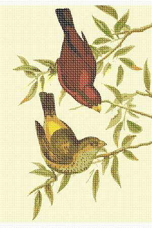 John Gould's painting of the Scarlet Finch, an Asian bird.