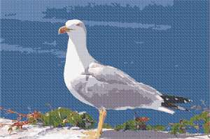 This seagull makes you think beach