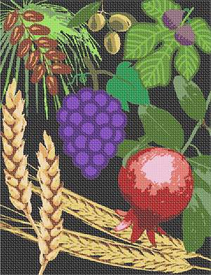 The seven species of the Holy Land.  This one features a dark background. Wheat, barley, grapes, pomegranate, olive, date, and fig.  On Tu Bshvat, the annual Jewish holiday celebration for the trees, we try to eat as many foods from the Shivas Haminim.