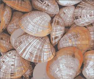 A collage of shells