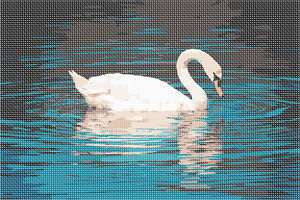 Graceful swan surrounding by aquatic ripples