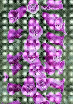 Bell shaped floral beauty. Grow Foxglove: Part sun to light shade, rich, moist soil. Tubular flowers attract bees and hummingbirds, are excellent for cutting. Plants are toxic; show excellent deer and rabbit resistance. Easy to grow, will frequently self sow. Flowers and floral design are among the most popular needlepoint designs. People have been stitching flowers and floral motifs for hundreds of years.  Flowers are bright and pleasant, and most have underlying meanings to them.