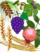 The Torah praises the Land of Israel by praising seven of its fruits: wheat, barley, grapes, figs, pomegranates, olives and dates.
