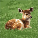 Newborn sitatunga resting in the grass. Also known as a marshbuck, a swamp-dwelling antelope found throughout central Africa.
