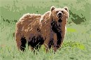 A Kodiak bear standing in the grass.