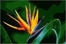 This exotic flower, the bird of paradise, is as stunning in this design as it is in real life.