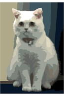 British Shorthair (Large)