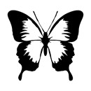 Butterfly silhouette in black and white