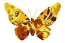 Swirls of yellows adorn this butterfly