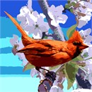 Cardinal And Spring Flowers
