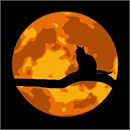 Cat In Moonlight