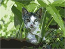 This cat is peeking through the foliage and is looking straight at you