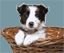 Cute doggie in a wicker basket