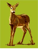 A lonesome deer, elegant and lightfooted.