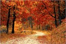 Path In Autumn