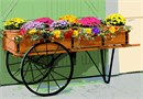 A flower cart full of budding blossoms