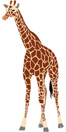 Tall, lean and graceful giraffe