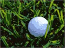 A golf ball hidden in the grass.