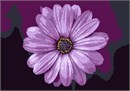 I Love Purple Flower