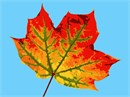 This leaf up close is a perfect project for autumn