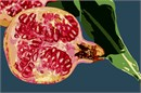 Open Pomegranate