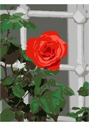 Open Rose By The Window