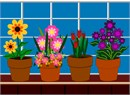 Plants on the windowsill.  Four potted plants in vibrant shades and colors sit in a row in front of the window.