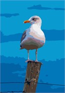 Seagull Post