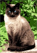 A siamese cat, just sitting there, contemplating.