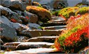 Steps cut into the stone face of the mountain ascend among flowering bushes and shady boulders.